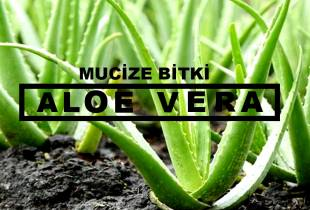 Mucize Bitki; Aloe Vera